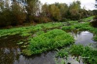Fiume Alcantara Fiume Alcantara nella zona di Moio Alcantara, ricco di vegetazione, oggi Parco della Valle Dell'alcantara.  - Moio alcantara (2263 clic)