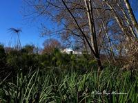 Oasi WWF di Fiumefreddo di Sicilia (2101 clic)