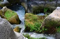 Gole dell'Alcantare Gole dell'Alcantare nella zona del comune di Moio Alcantara.  - Moio alcantara (2192 clic)