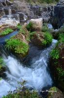 Gole dell'Alcantare Gole dell'Alcantare nella zona del comune di Moio Alcantara.  - Moio alcantara (2088 clic)