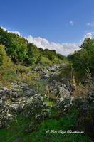Gole dell'Alcantare Gole dell'Alcantare nella zona del comune di Moio Alcantara.  - Moio alcantara (2245 clic)