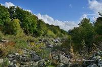 Gole dell'Alcantare Gole dell'Alcantare nella zona del comune di Moio Alcantara.  - Moio alcantara (2197 clic)