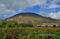 Vulcanetto di Moio  Il vulcano di Moio è il più eccentrico ed insieme il più settentrionale dei coni avventizi dell'Etna. L'edificio vulcanico è alto 703 metri sul livello del mare ed il suo diametro alla base è di circa 700 metri.  - Moio alcantara (3428 clic)