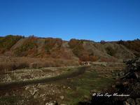 Etna e i colori dell'autunno Nella foto si nota la colata lavica in più bracci, si tratta della colata del 1928 che distrusse la cittadina di Mascali e arrivò fino a Carrabba, a pochi centinaia di metri dal mare  - Fornazzo (2359 clic)