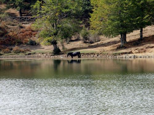 Lago Maulazzo Fauna e Flora. - NEBRODI - inserita il