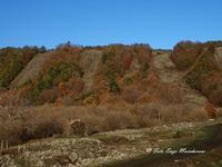 Etna e i colori dell'autunno Nella foto si nota la colata lavica in più bracci, si tratta della colata del 1928 che distrusse la cittadina di Mascali e arrivò fino a Carrabba, a pochi centinaia di metri dal mare  - Fornazzo (2707 clic)