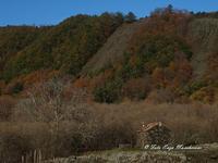 Etna e i colori dell'autunno Nella foto si nota la colata lavica in più bracci, si tratta della colata del 1928 che distrusse la cittadina di Mascali e arrivò fino a Carrabba, a pochi centinaia di metri dal mare  - Fornazzo (2470 clic)