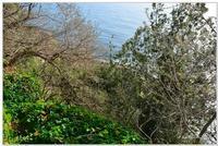 Parco Naturale  Ai piedi di Acireale, lungo un costone lavico che scende a strapiombo sul mare turchino, si trova la Timpa di Acireale. Il territorio, compreso lungo la costa che da Acque Grandi (a nord di Capomulini) conduce a Santa Maria degli Ammalati (frazione di Acireale), è caratterizzato da un promontorio di circa 80 metri di altezza a ridosso della costa di Acireale, ricoperto da una lussureggiante vegetazione costituita da edera, euforbia e carrubbi.  - Acireale (1237 clic)