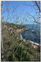 Parco Naturale  Ai piedi di Acireale, lungo un costone lavico che scende a strapiombo sul mare turchino, si trova la Timpa di Acireale. L'area per il suo elevato valore naturalistico, geologico, faunistico e vegetativo è stata dichiarata Riserva Naturale Orientata nel 1999 e affidata alla gestione dell'Azienda Foreste Demaniali.  - Acireale (1200 clic)