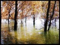 Lago Ogliastro (Aidone EN). Quanti alberi hanno scelto di stare in acqua? Forse sono pochi. Moriranno.  - Aidone (6518 clic)