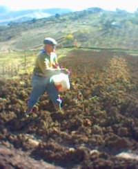 SEMINA DEL GRANO  - Villarosa (8013 clic)