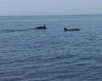 Navigando verso l?isolotto dopo poche miglia non è raro incontrare diversi delfini    - Lampione (5113 clic)