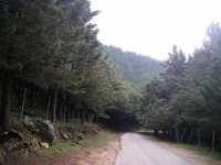 Monte Gradara   - Borgetto (9325 clic)