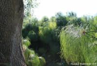 riserva naturale fiume ciane il papiro  - Siracusa (2280 clic)