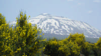 ETNA IN PRIMAVERA  - Etna (3562 clic)