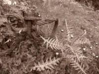 Balata di Baida - Monte Sparagio - in cava ...!  - Castellammare del golfo (2506 clic)