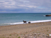 cavallo sul litorale di Aspra  - Aspra (3257 clic)