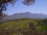 monte cane  - Casteldaccia (3071 clic)