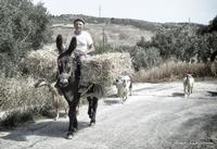 A Casa Contadino con il suo Asinello che va in Campagna  - Caltabellotta (997 clic)