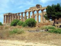 grandezza del passato  - Selinunte (3229 clic)