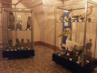 Museo ornitologico  - Chiaramonte gulfi (2655 clic)