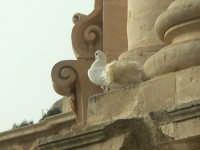 Modica - particolare della facciata con colomba a San Giorgio MODICA SALVATORE BRANCATI
