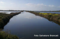 Canale di Pantano Longarini  - Ispica (1751 clic)