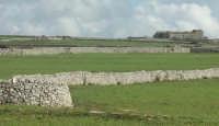 Luoghi del Commissario Montalbano: Paesaggio Ibleo con muri a secco  - Ragusa (3455 clic)