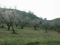 Paesaggio   - Mazzarino (3593 clic)