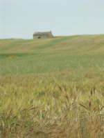 Paesaggio presso Granieri  - Grammichele (3564 clic)