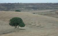 Paesaggio   - Militello in val di catania (2561 clic)