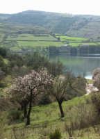 Paesaggio presso la Diga dell'Irminio  - Giarratana (3392 clic)