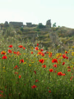 Resti del castello di Occhiolà  - Grammichele (4604 clic)