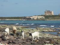 Scalo Mandrie e Isola delle Correnti  - Portopalo di capo passero (4246 clic)