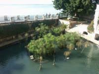 Siracusa: Fonte Aretusa  - Siracusa (1413 clic)