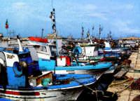 le barche al molo  - Trapani (1240 clic)
