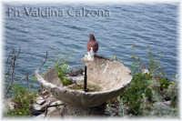 Acicastello..Piccione pensieroso.. Ph Valdina Calzona 2009  - Aci castello (3970 clic)