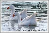 Ognina-Ph Valdina Calzona 2010  - Catania (3047 clic)