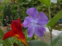 Aprile, sbocciare di fiori.  - Bolognetta (6439 clic)