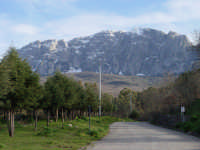 Bosco di Ficuzza  - Ficuzza (6362 clic)