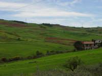 Meravigliosi colori della natura  - Bolognetta (4481 clic)