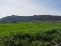 In primo piano un campo di grano, nello sfondo una delle poche riserve d'ossigeno della Sicilia: Bosco di Ficuzza  - Godrano (6619 clic)