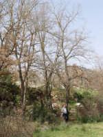Alberi d'inverno PIANA DEGLI ALBANESI GABRIELE MILONE