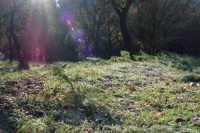 Brina ghiacciata nel bosco  - Ficuzza (5603 clic)