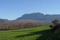 Bosco Ficuzza alle falde di Rocca Busambra  - Ficuzza (7049 clic)