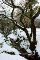 Neve al primo giorno di primavera a Ficuzza.  - Ficuzza (4602 clic)