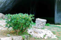 Zona archeologica  - Siracusa (2103 clic)