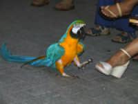 Un simpatico pappagallo vi accoglierà nei vicoli  - Siracusa (1409 clic)