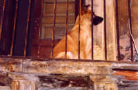 Via delle Finanze, cane fedele attende l'arrivo della padrona.  - Catania (3534 clic)