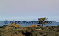Paesaggio nei pressi di Monte S.Maria, passo dei Dammusi. Pino laricio sulle lave cordate. Pista altomontana. Aprile, 2005.  - Etna (2141 clic)